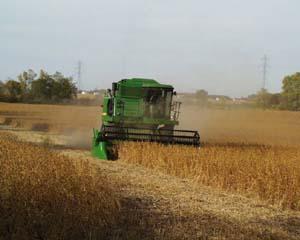 green combine moves through golden field of grain